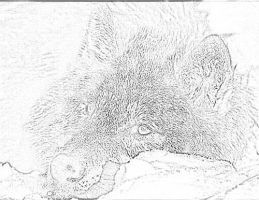 how to draw a snow wolf wolf drawing by katy500 on deviantart wolf to draw how a snow