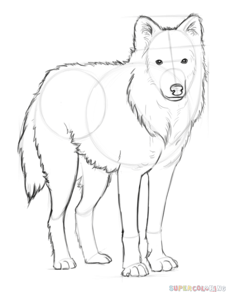 how to draw a snow wolf wolf drawing pencil sketch colorful realistic art to wolf draw snow how a