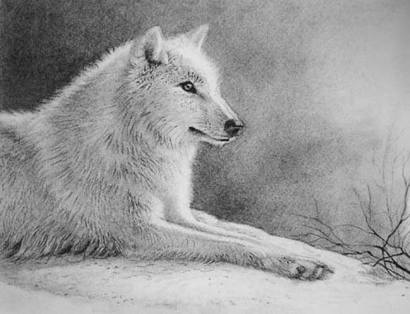 how to draw a snow wolf wolf in snow sketch by ladyalita on deviantart snow to how draw wolf a