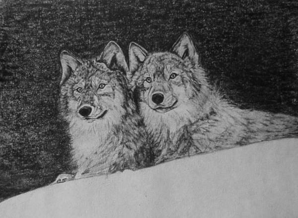 how to draw a snow wolf wolf pack drawings fine art america wolf a how draw to snow