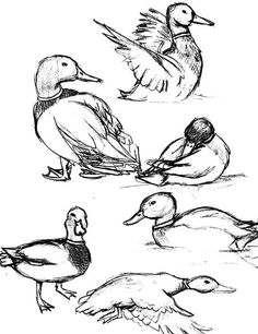 how to draw a sparrow step by step how to draw a house sparrow step by step part 3 easy how to step by step sparrow a draw
