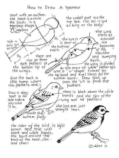 how to draw a sparrow step by step how to draw a sparrow step by step drawingforallnet a step how sparrow to draw step by
