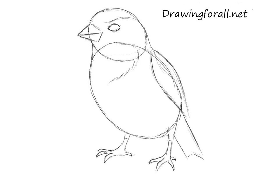 how to draw a sparrow step by step how to draw a sparrow step how to draw step sparrow by a