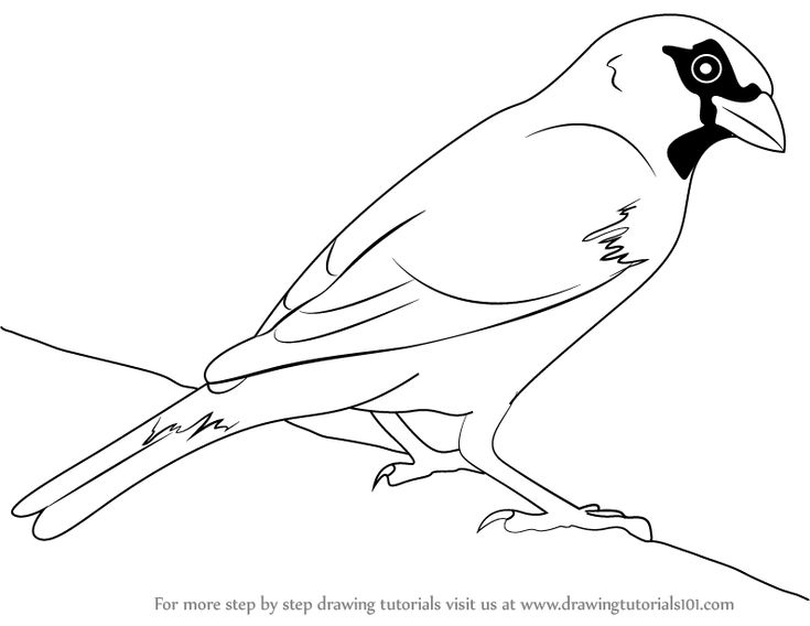 how to draw a sparrow step by step how to draw a sparrow step sparrow a how by draw to step
