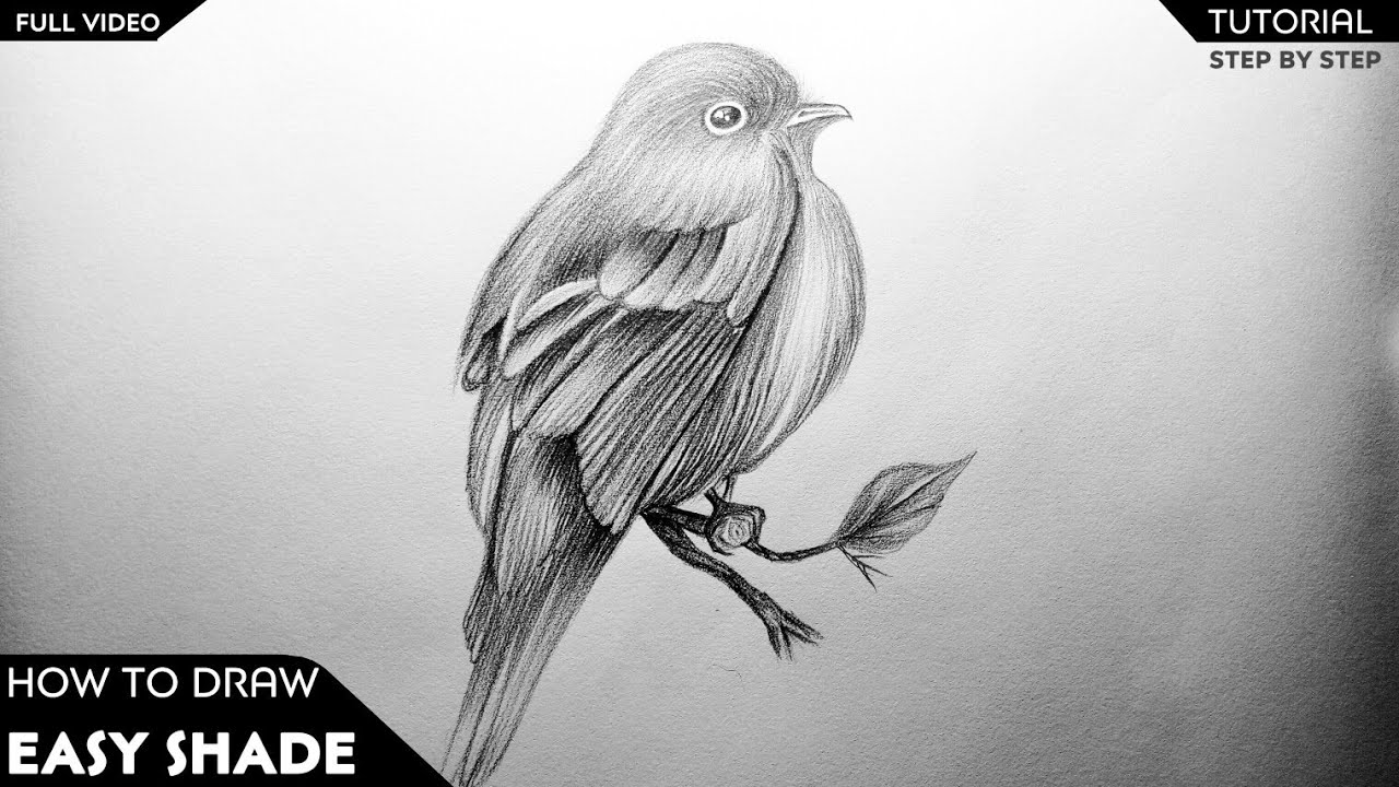 how to draw a sparrow step by step how to draw sparrow गरय easy and step by step or by draw a to sparrow step step how