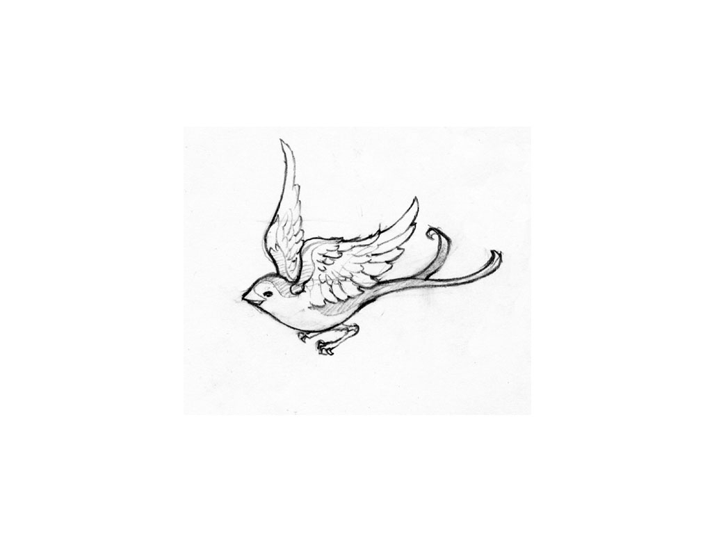 how to draw a sparrow step by step how to draw sparrow how to draw a bird for kids sparrow how by step to a draw sparrow step