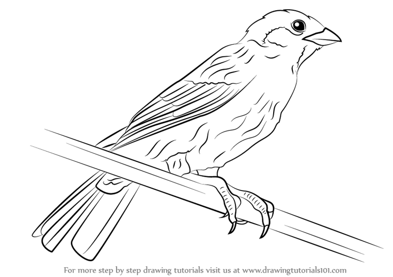 how to draw a sparrow step by step how to draw sparrows step by step birds animals free draw how a step to sparrow step by