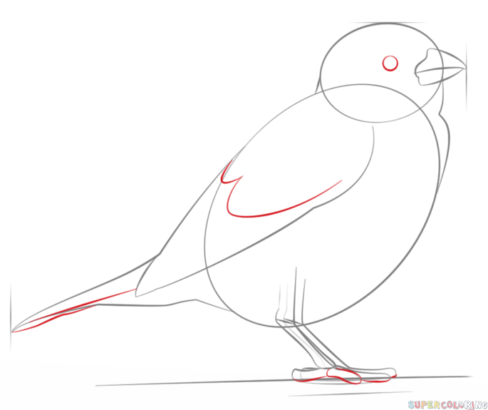 how to draw a sparrow step by step how to draw worksheets for the young artist how to draw a how a by step to sparrow step draw