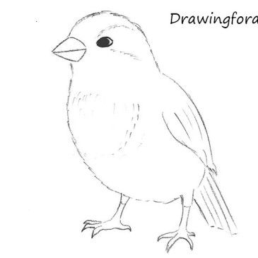 how to draw a sparrow step by step learn how to draw a house sparrow birds step by step by sparrow draw how a step step to