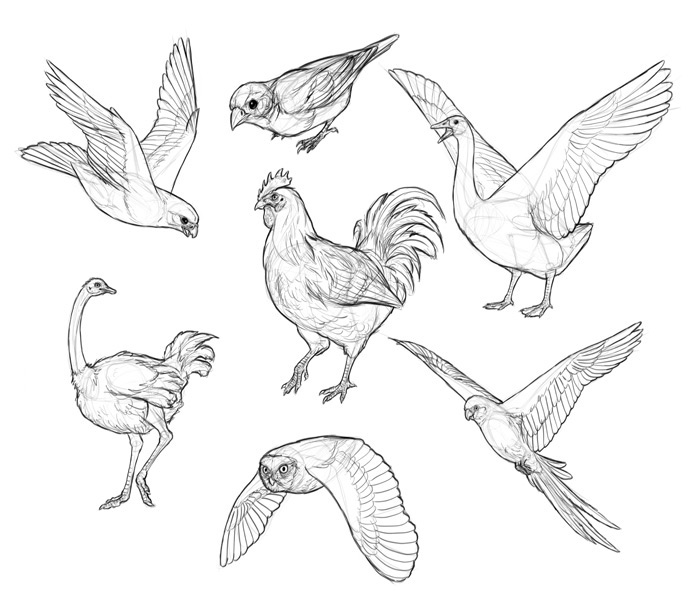how to draw a sparrow step by step simple sparrow drawing at getdrawings free download sparrow step by a step draw to how