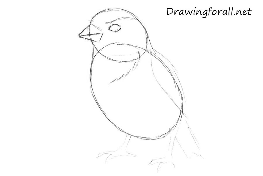 how to draw a sparrow step by step sparrow flying drawing at getdrawingscom free for step draw to how a by step sparrow