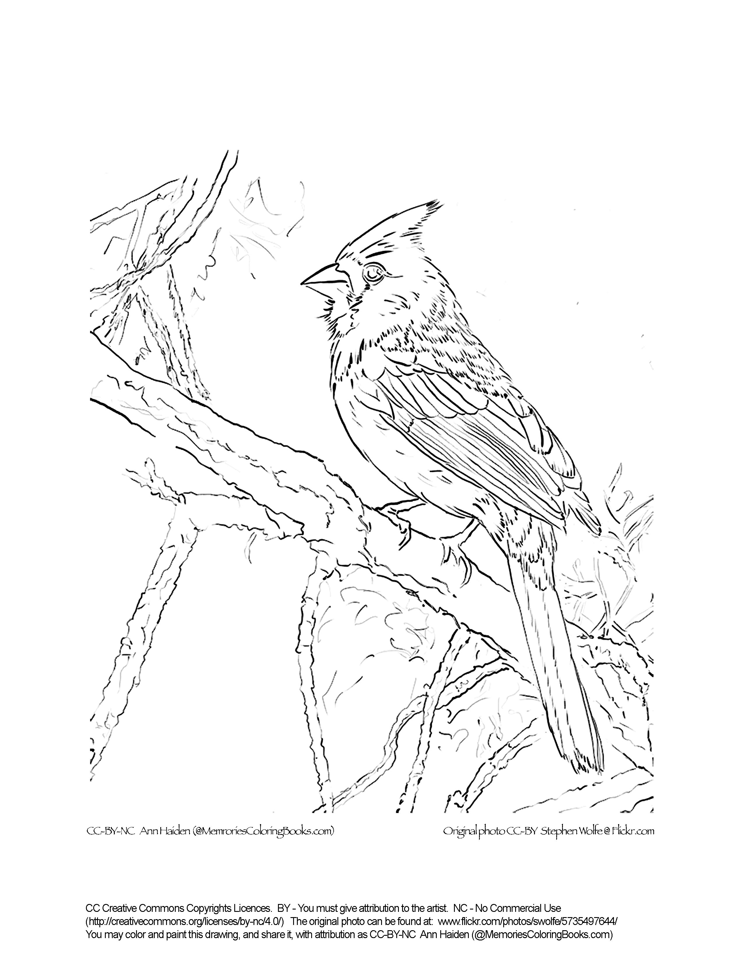 how to draw a sparrow step by step sparrow line drawing at getdrawings free download step a to how sparrow by draw step