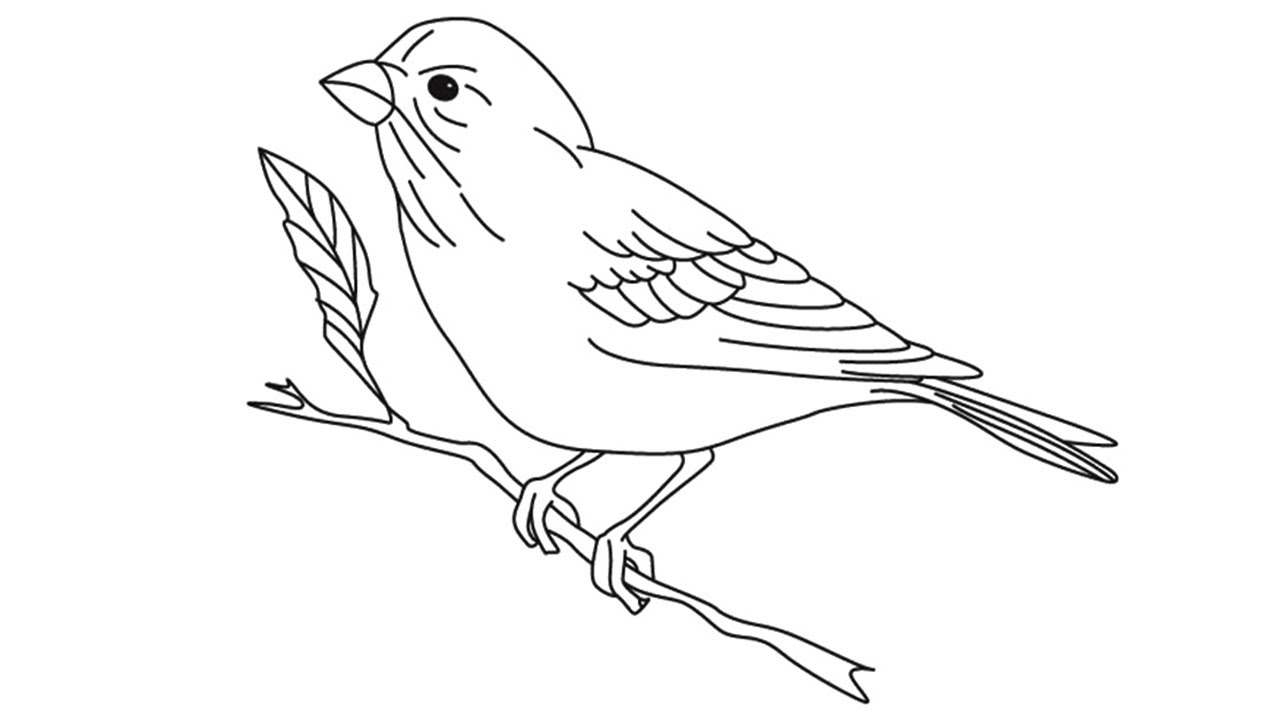 how to draw a sparrow step by step step by step how to draw a eurasian tree sparrow sparrow by step a to how step draw