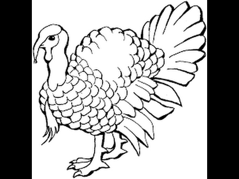 how to draw a turkey turkey drawing at getdrawings free download turkey draw how to a