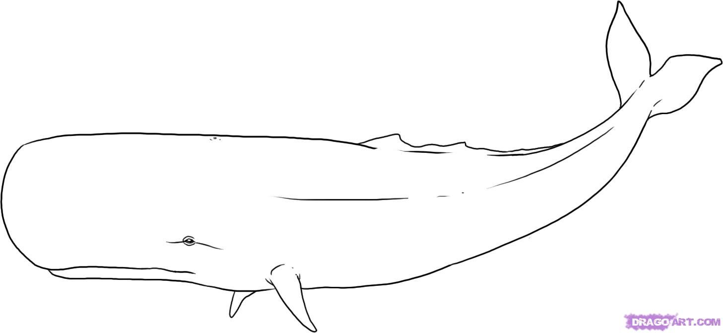how to draw a whale step by step how to draw a whale draw central by whale step draw a step to how