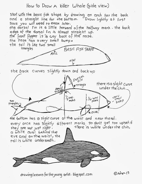 how to draw a whale step by step how to draw worksheets for the young artist how to draw step draw to step by how a whale