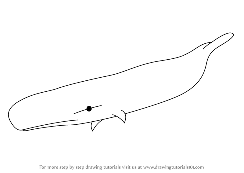 how to draw a whale step by step learn how to draw humpback whale from fantasia fantasia to whale step by a step draw how
