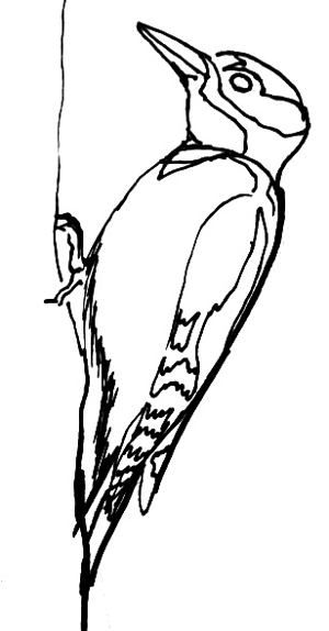 how to draw a woodpecker how to draw a woodpecker step by step drawing tutorials draw to woodpecker how a
