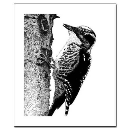 how to draw a woodpecker how to draw a woodpecker step by step easy animals 2 draw how to draw woodpecker a