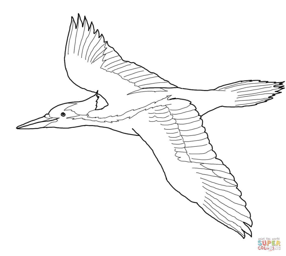 how to draw a woodpecker learn how to draw a pileated woodpecker woodpeckers step woodpecker how to a draw