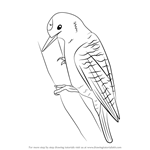 how to draw a woodpecker the pileated woodpecker is one of the biggest birds and draw how a to woodpecker