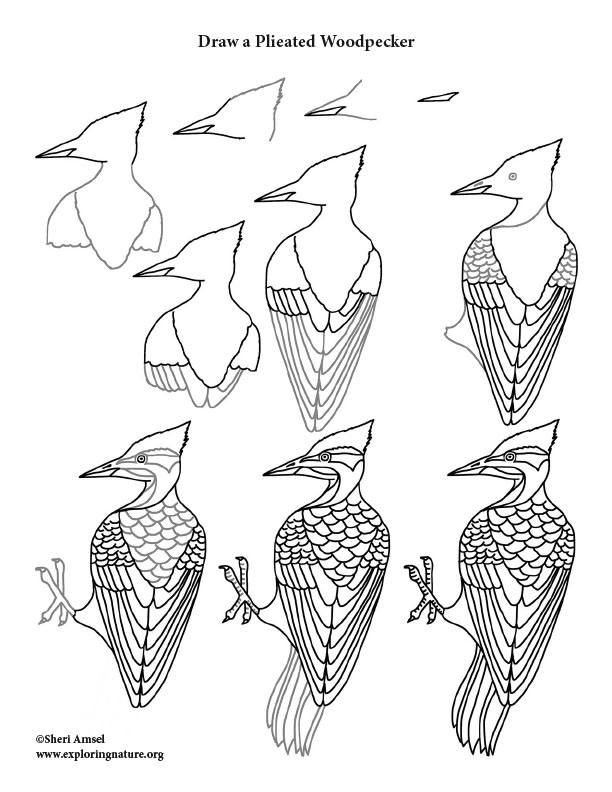 how to draw a woodpecker woodpecker drawing woodpecker art woodpecker to draw how a woodpecker