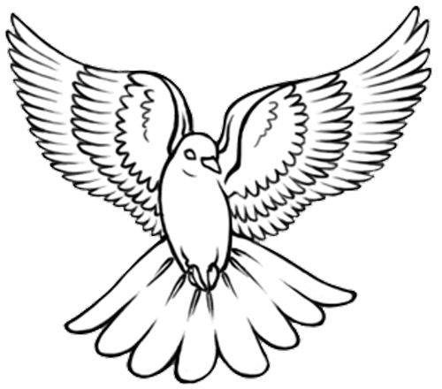 how to draw an easy dove dove drawing free download on clipartmag dove draw to easy an how