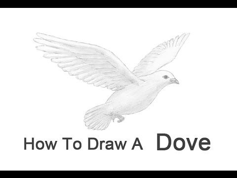 how to draw an easy dove flying books drawing free download on clipartmag to draw dove easy an how