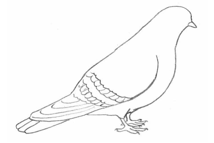 how to draw an easy dove how to draw a dove for beginners drawingforallnet easy dove to an how draw