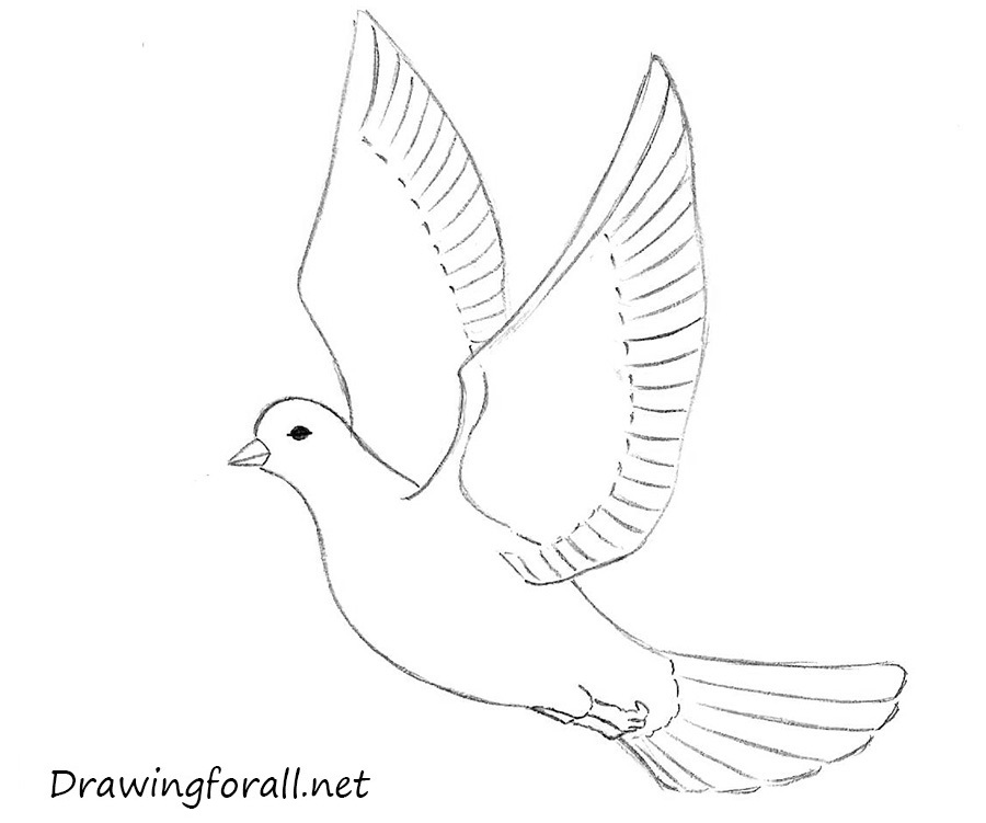 how to draw an easy dove line in drawing google search lines pinterest how easy an draw dove how to