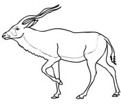 how to draw antelope american antelope pronghorn coloring page free printable to antelope how draw