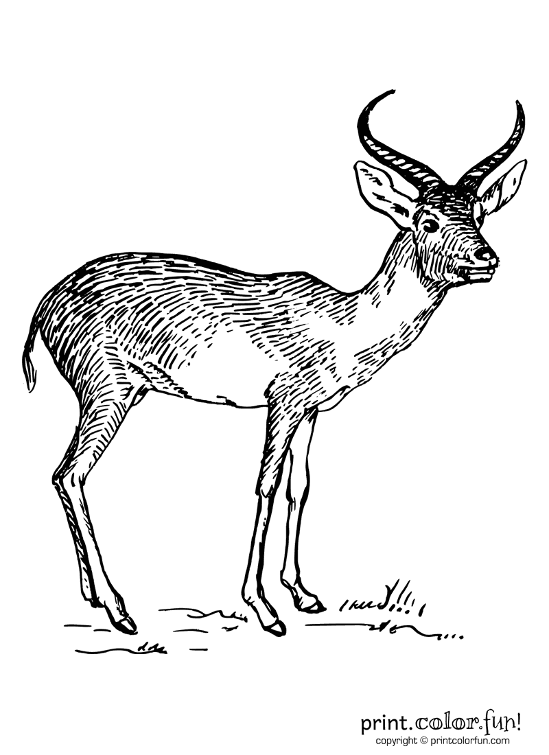 how to draw antelope antelope clip art at clkercom vector clip art online how draw antelope to