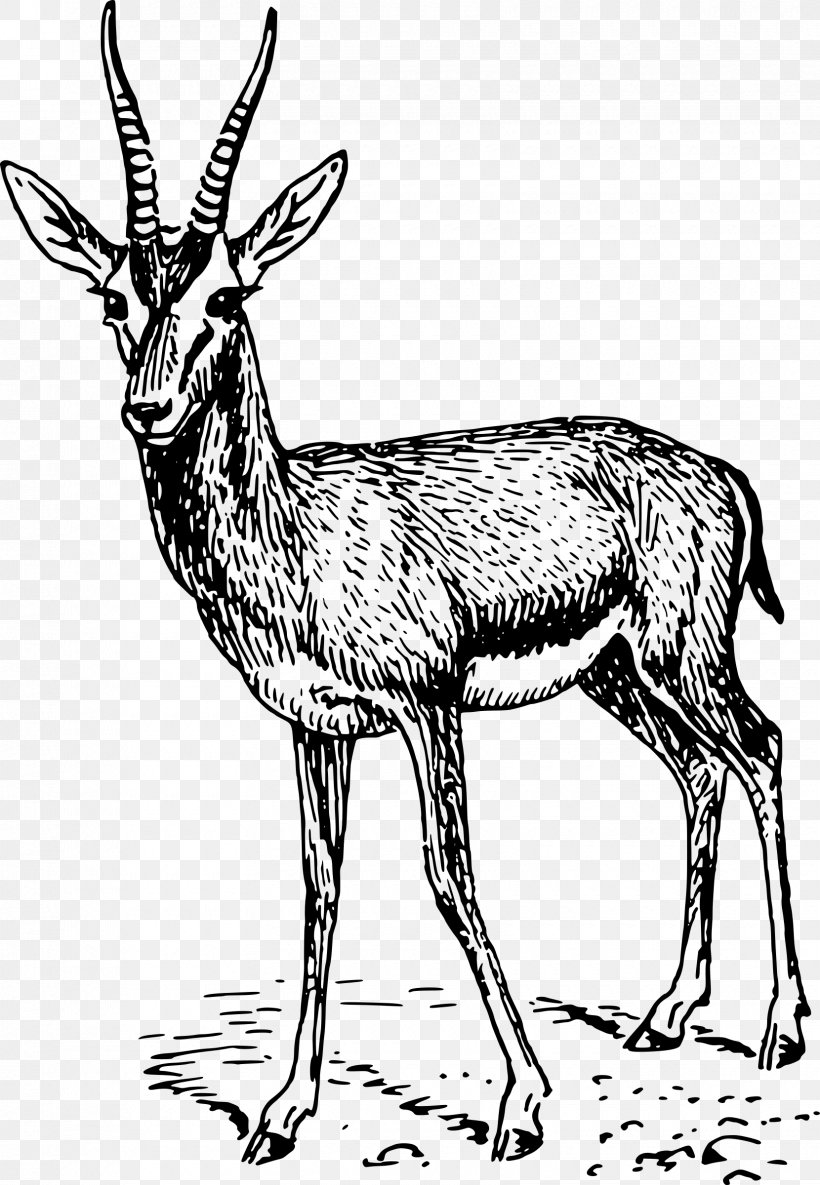 how to draw antelope antelope drawing at paintingvalleycom explore antelope draw to how
