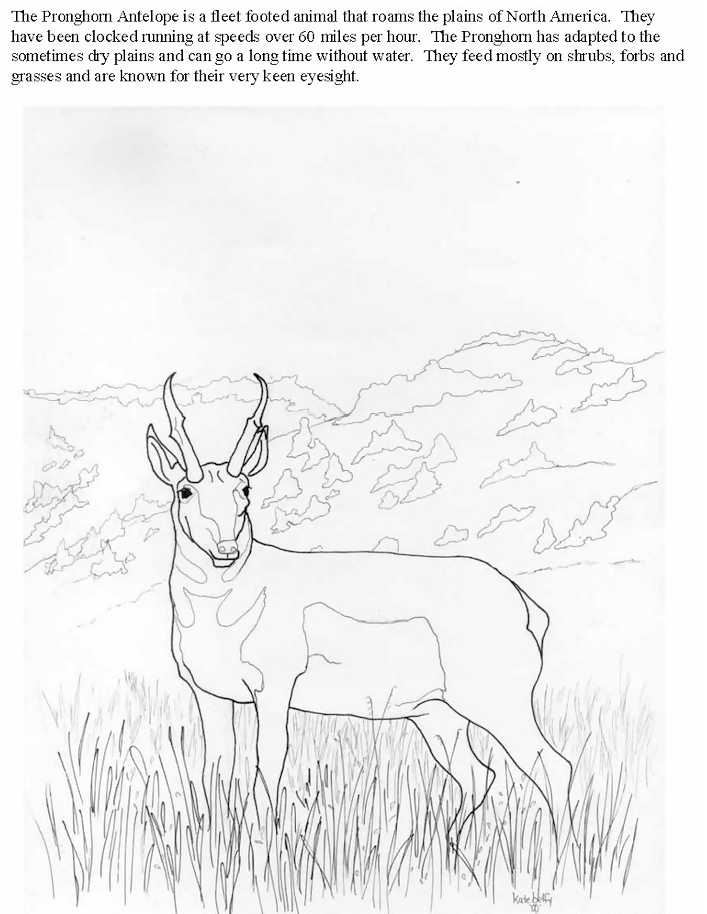 how to draw antelope antelope drawing at paintingvalleycom explore draw antelope how to