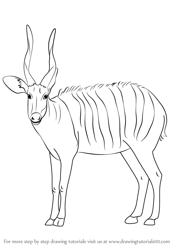 how to draw antelope antelope drawing at paintingvalleycom explore how to draw antelope
