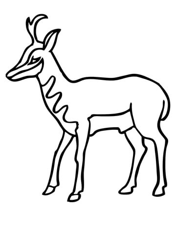 how to draw antelope antelope free printable coloring pages how draw antelope to