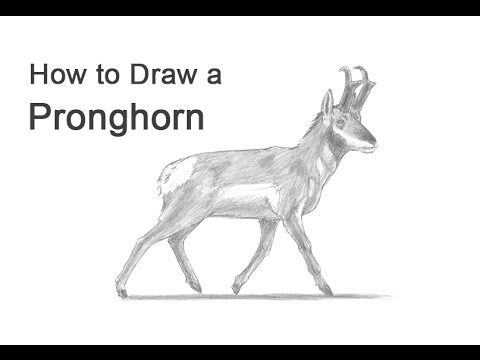 how to draw antelope benefit4kids coloring book draw to how antelope