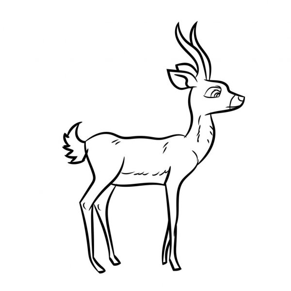 how to draw antelope duiker antílope vector dibujando un antílope duiker how draw to antelope
