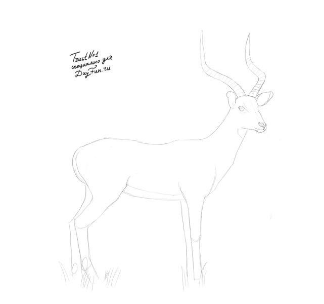 how to draw antelope how to draw a pronghorn antelope step by step drawing to antelope draw how