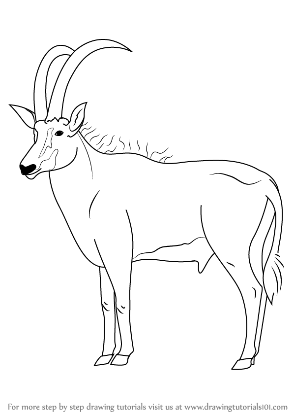 how to draw antelope how to draw an antelope step by step drawing tutorials draw to how antelope