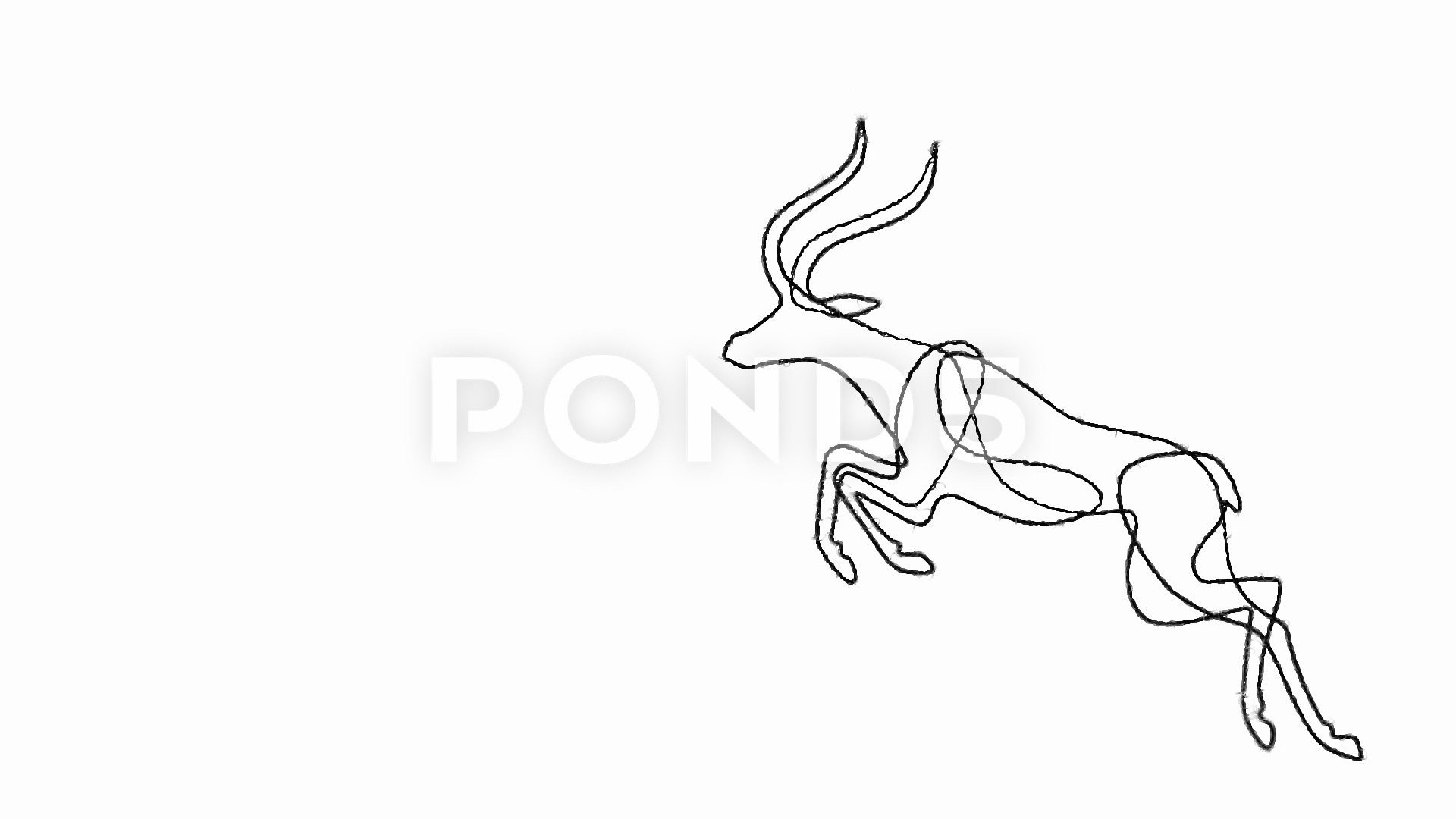 how to draw antelope learn how to draw a bongo antelope wild animals step by to antelope how draw