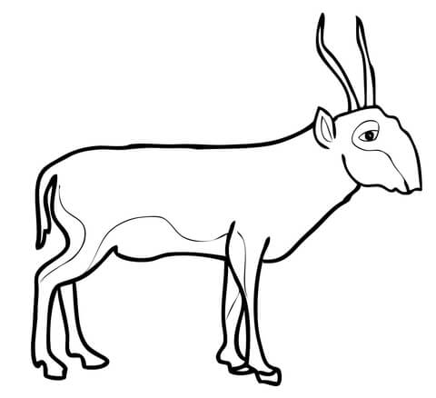 how to draw antelope vector hand draw portrait of antelope impala vector draw antelope how to