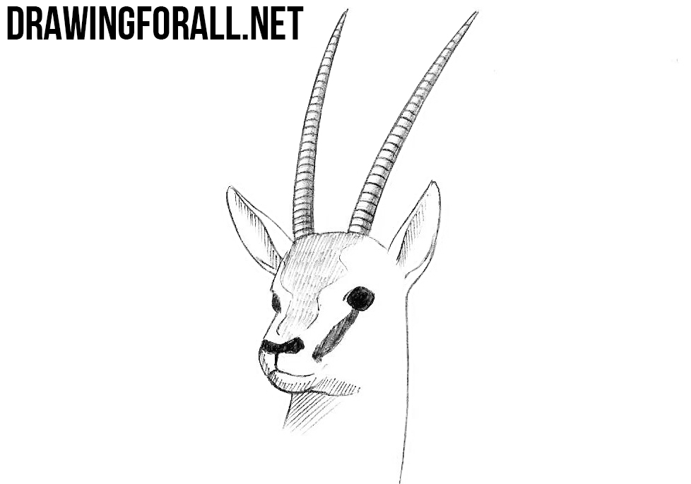 How to draw antelope