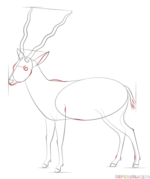 how to draw antelope wild and domestic animals arcmelcom to draw how antelope