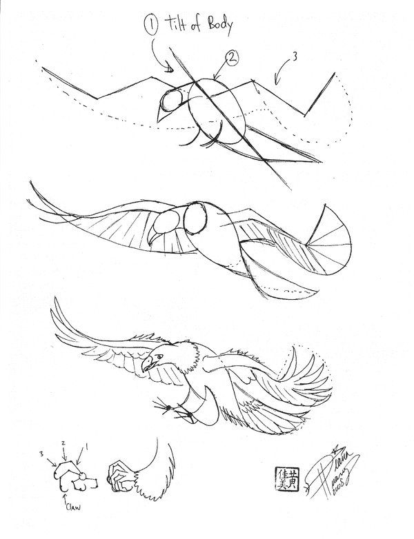 how to draw birds of prey 12 bird of prey illustration eagle drawing original of draw prey to how birds