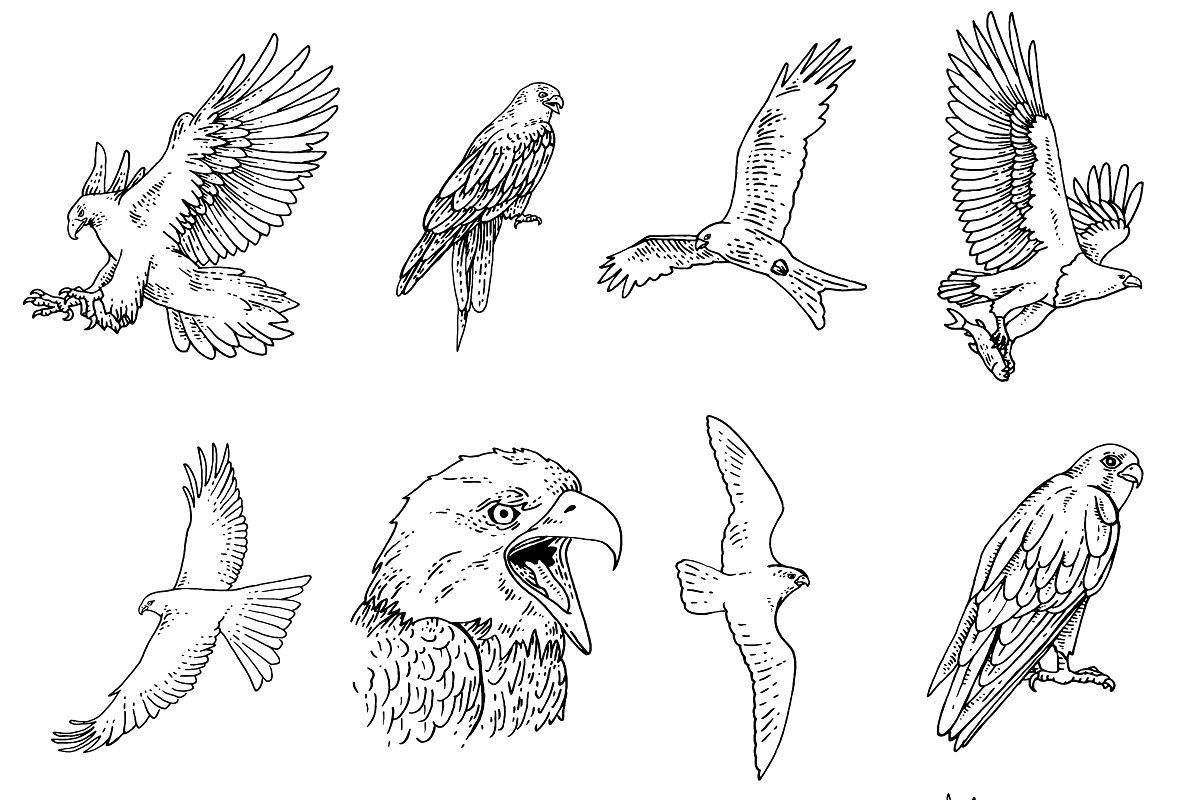 how to draw birds of prey beaks and food matching pagei39ve actually been having to of birds prey draw how