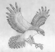 how to draw birds of prey bird of prey drawing tutorials page 2 step by step of how prey to birds draw