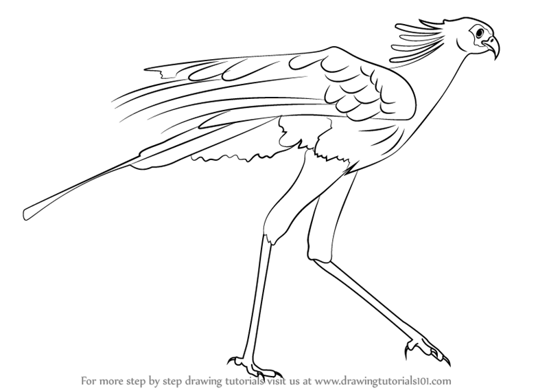 how to draw birds of prey falcon falcon drawing bird of prey tattoo bird drawings birds prey draw of how to
