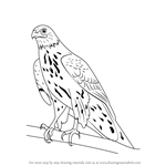 how to draw birds of prey how to draw a hawk harris hawk youtube bird drawings to of prey birds how draw