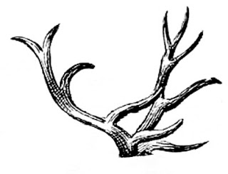 how to draw deer antlers how to draw antlers step by step deer how to antlers draw